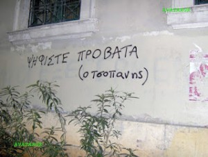 tsopan (1)