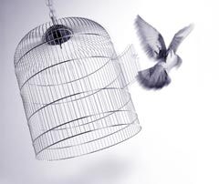 240-FreeBird