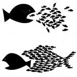 fish-e1386675193119